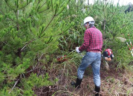 植林のための道づくり 1